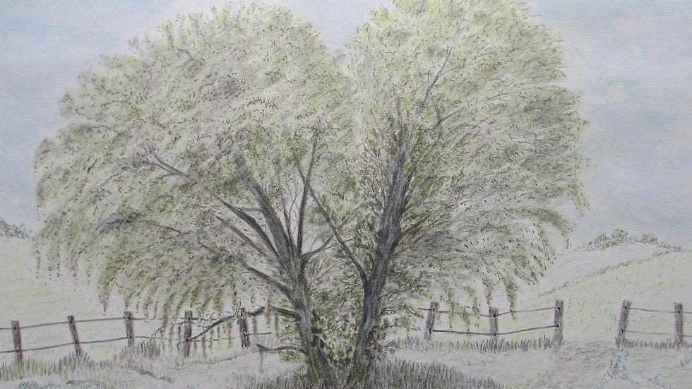 """""""White Willow"""""""
