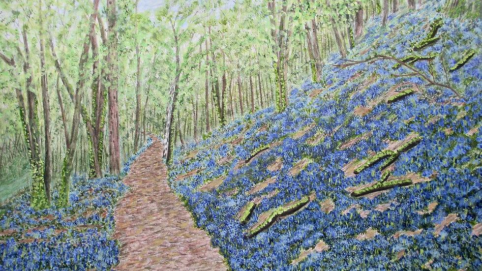 Bluebells in Greensforge Lane