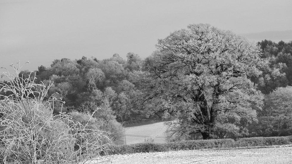 Winter in Dunsley
