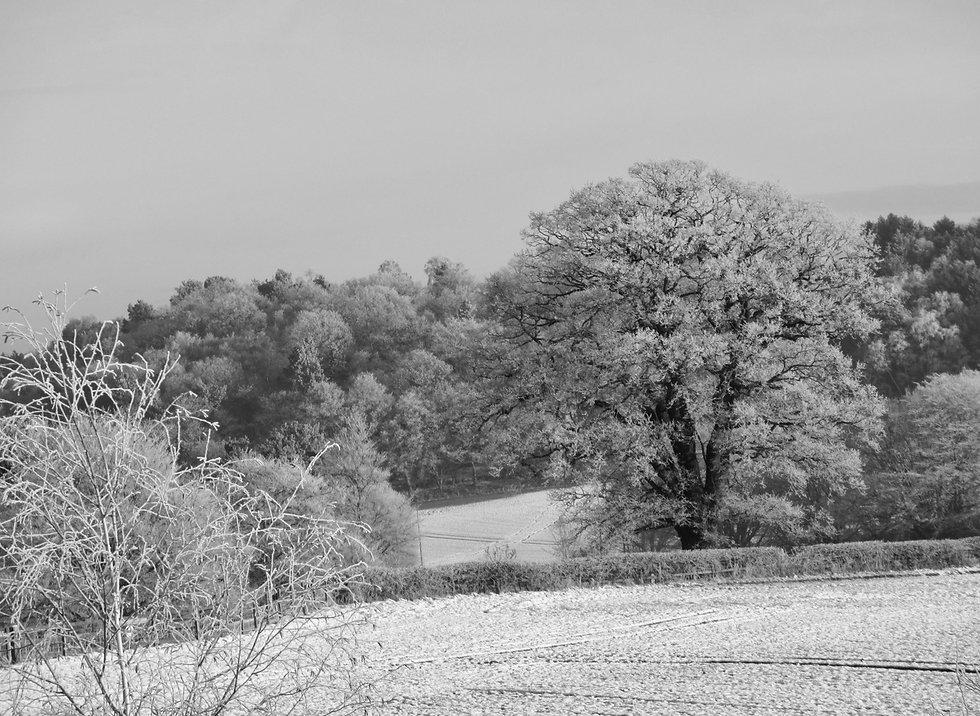 Winter in Dunsley.  29th December 2020.j