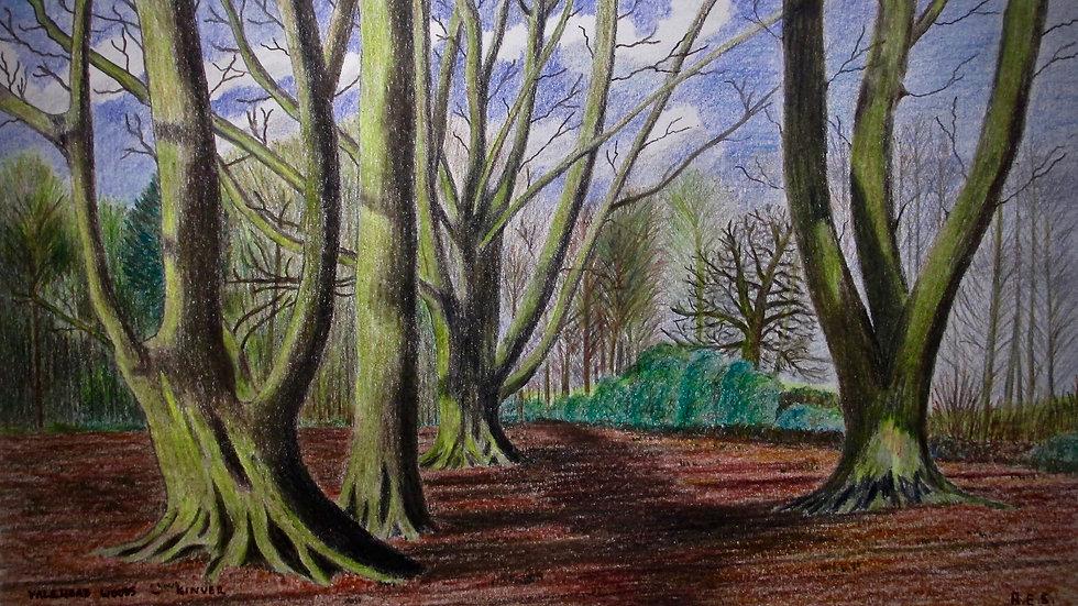 Vale Head Woods, Kinver