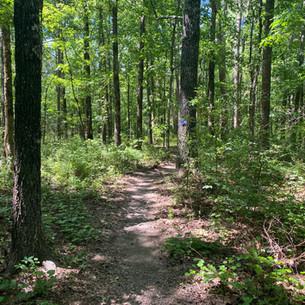 Trail at Big Creek Natural Area