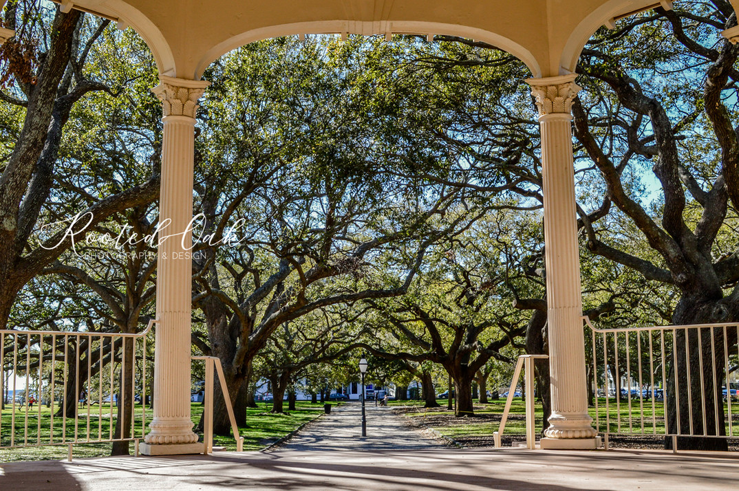 Charleston Prints-4.jpg