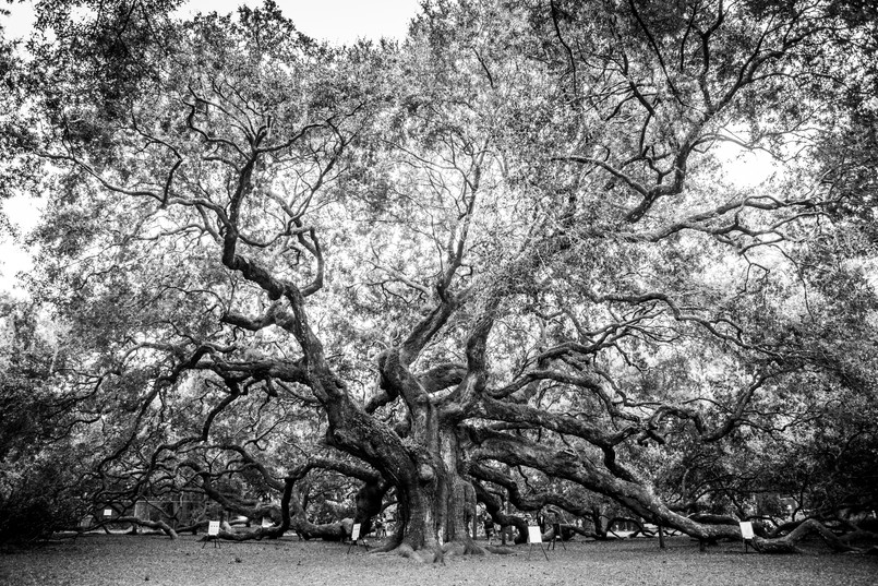 Angel Oak -2.jpg