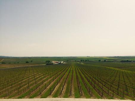 Ribafreixo Wines - Adega e Vinhos