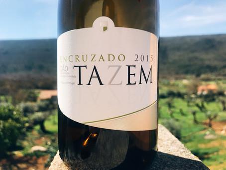Tazem Encruzado 2015