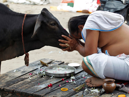 La protección de la vaca