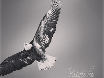 Born to Soar... (exert from book)