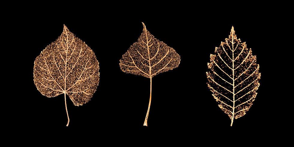 automne aux petits oignons.jpg