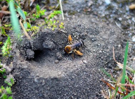 L'abeille qui avait un joli pantalon