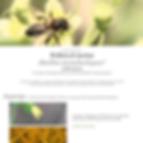 Vignette abeilles monolectiques.png