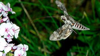 Observer les insectes nocturnes