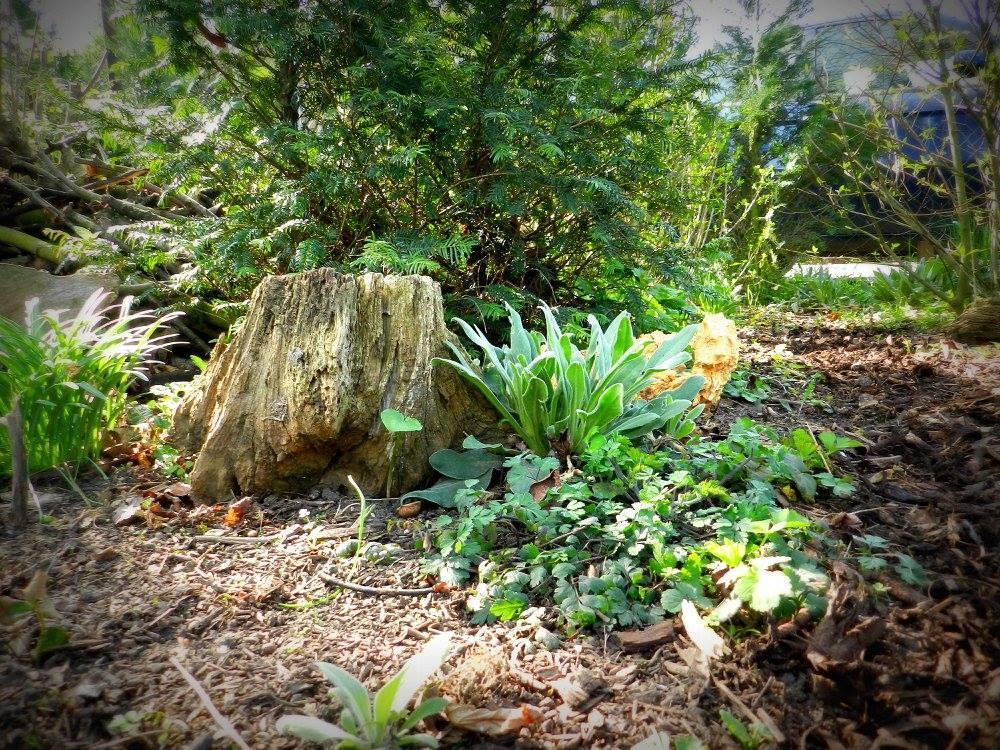 Bois mort en Zone Tampon