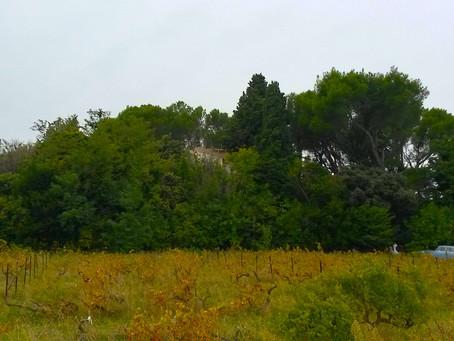 Région PACA: nouvel Hortus