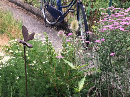 Hortus Herbarius, la part belle aux plantes médicinales !