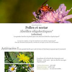 vignette abeilles oligolectiques.png