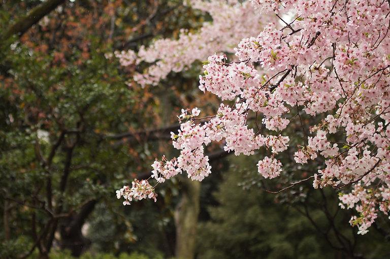 don-kawahigashi-57455-unsplash.jpg