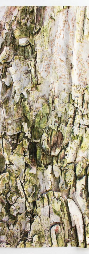 Paper Bark V