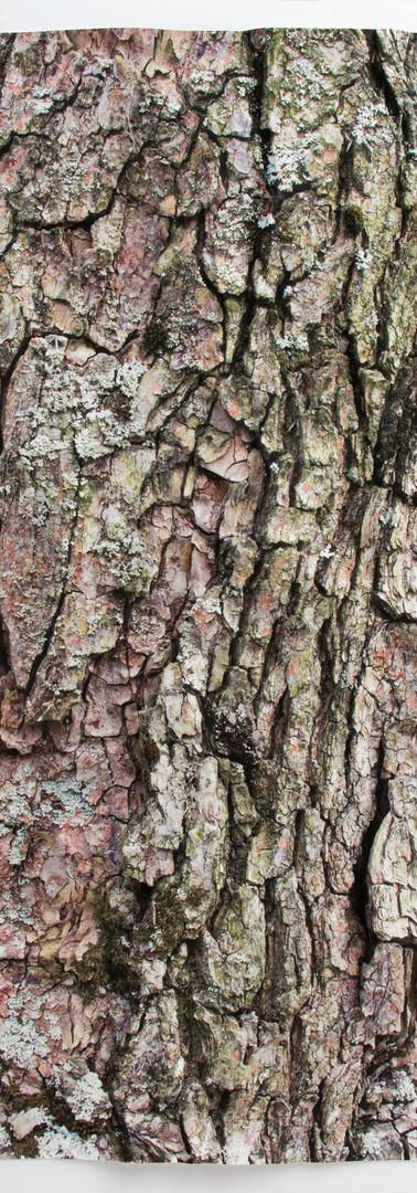Paper Bark I