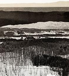 last forest III.jpg