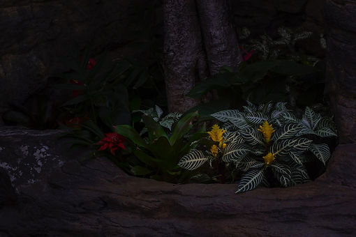flowers.(25x35).jpeg