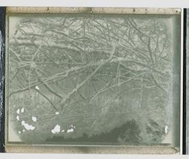 Polaroid#3
