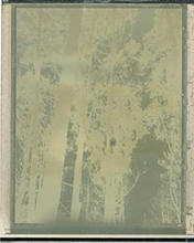 Polaroid#7