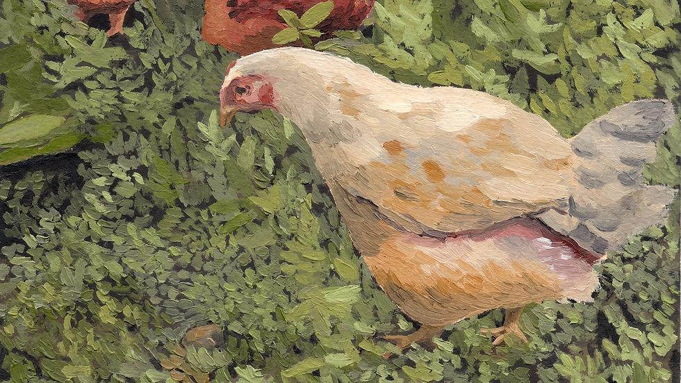 print galinhas