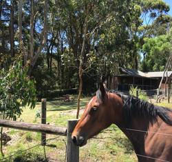 Oli the Horse
