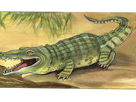 oliver-regner-wort-bild-lexikon-krokodil