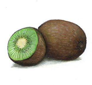 oliver-regner-wort-bild-lexikon-kiwi.jpg
