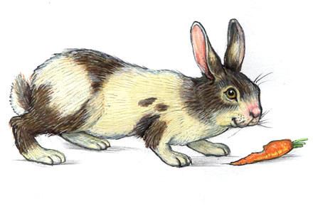 oliver-regner-wort-bild-lexikon-kaninche