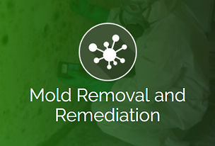 mold removal and remediation.jpeg