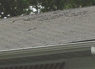 Neptune Roof Repair.jpg