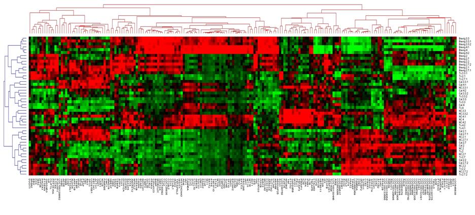 Heatmap of genes identified by machine learning pipeline