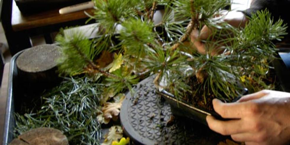 Autumn Care of Bonsai Trees