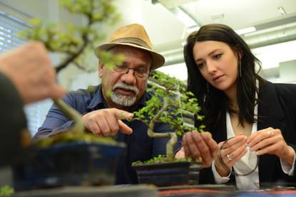 Bonsai Workshops will Captivate