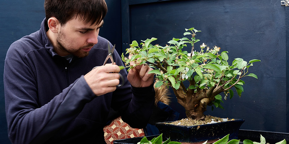 Bonsai Course for Beginners