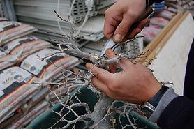 Branch Pruning.jpg