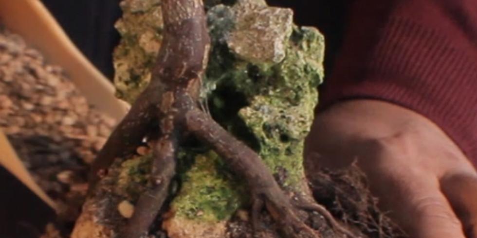 3206.Root Over Rock