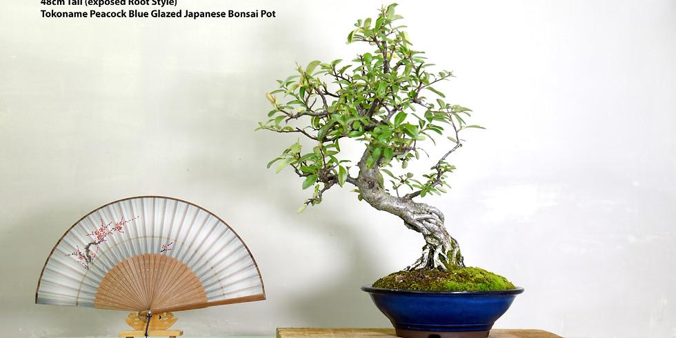 3209: Photographing Bonsai