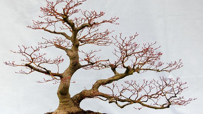 Open Bonsai Workshop - Autumn Care of Bonsai Trees