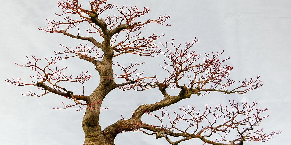 3105: Autumn Care of Bonsai Trees