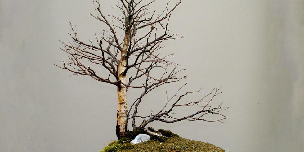 4010: Open Bonsai Workshops - Winter Preparation and Care of deciduous bonsai