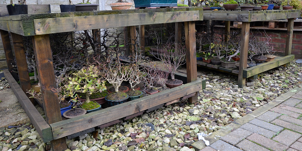 Masterclass: Autumn Pruning and Wiring of Conifers and Deciduous Bonsai