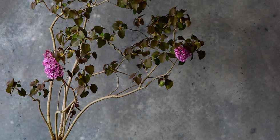 Open Bonsai Workshop