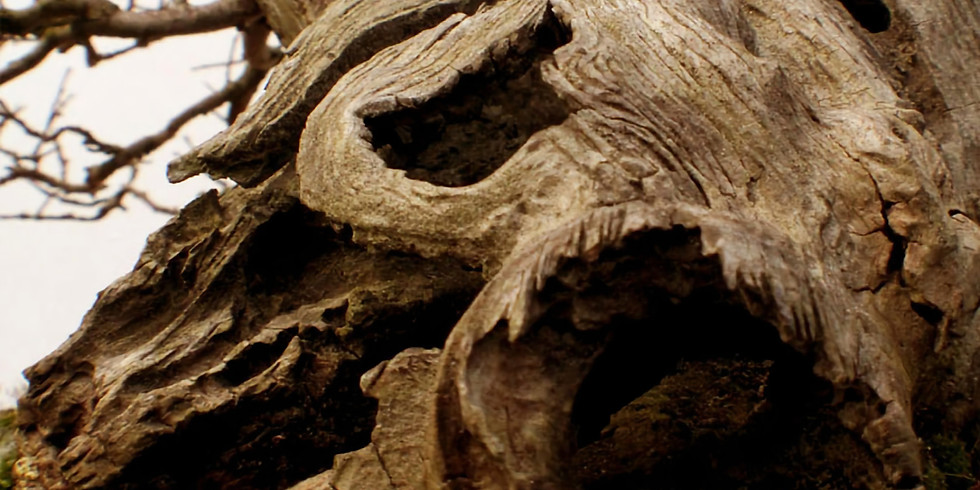 3301: Bonsai Deadwood Creation