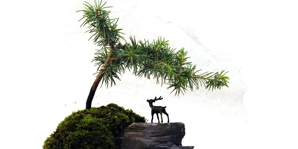 3205: Root-On-Rock Bonsai or Ishitsuki Bonsai