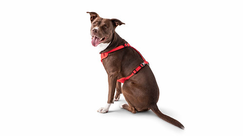TRAVEL HARNESS - RED