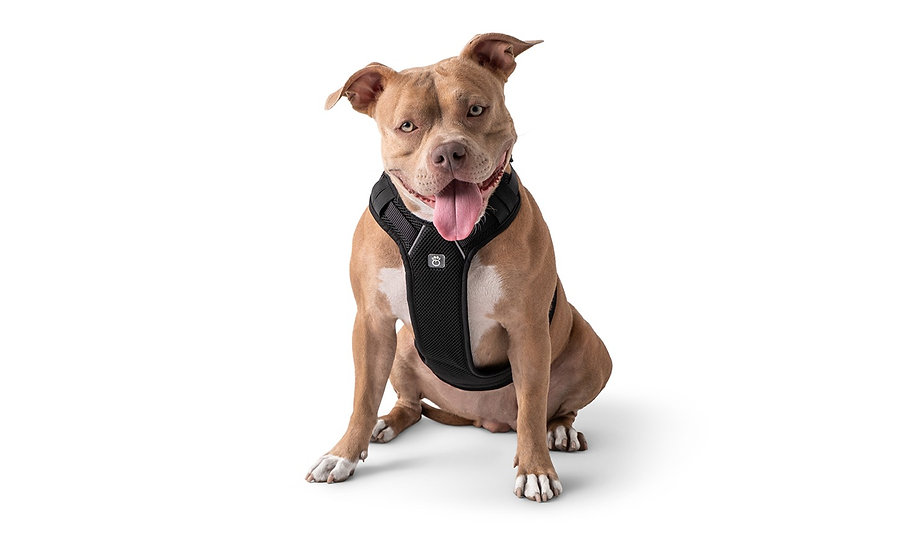 TRAVEL HARNESS - BLACK
